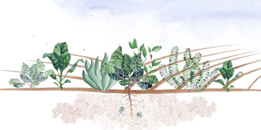 Patagonia Pro Vision: Dirt Cheap